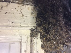 Termite invasion on the inside of home