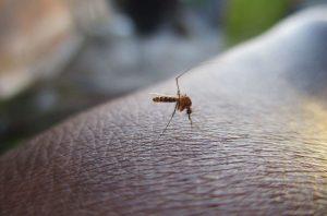 zika, mosquito